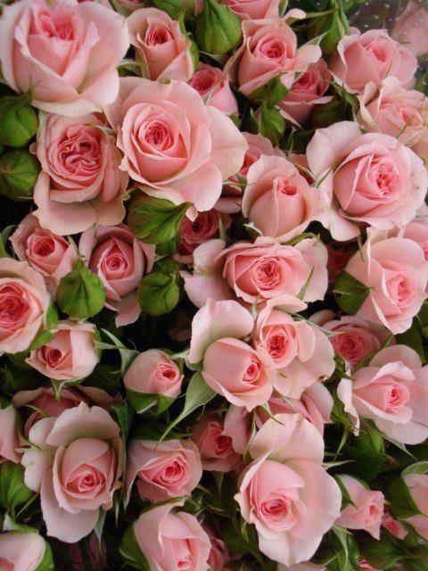 Розовые цветы картинки